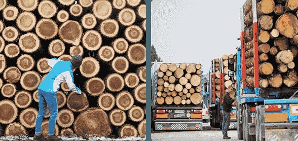 运动木地板原木供应基地